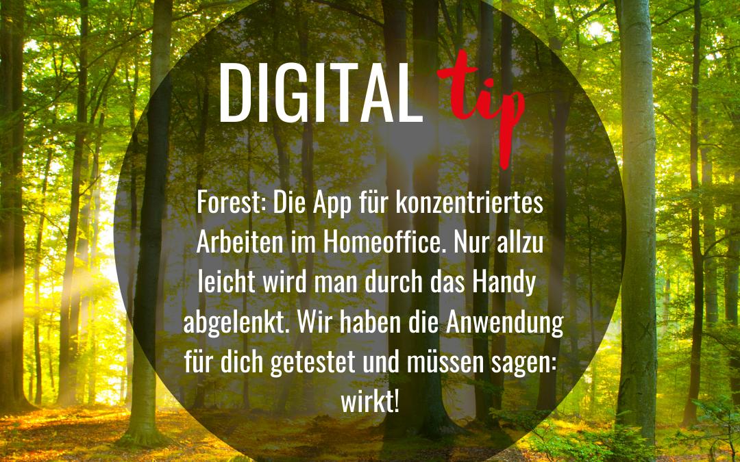 Forest: App für konzentriertes Arbeiten im Homeoffice